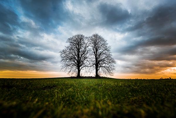 2 tree