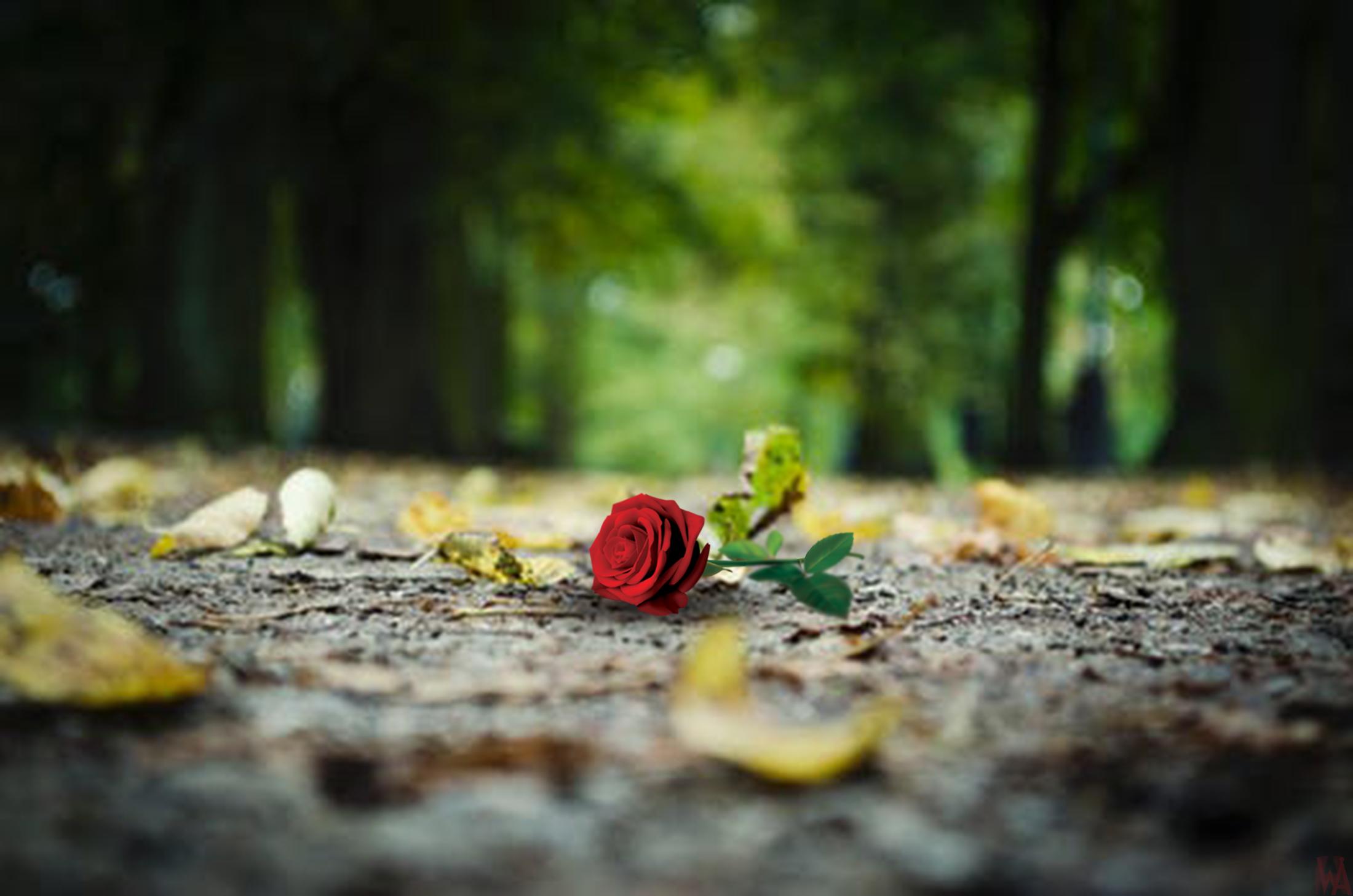 路上的玫瑰